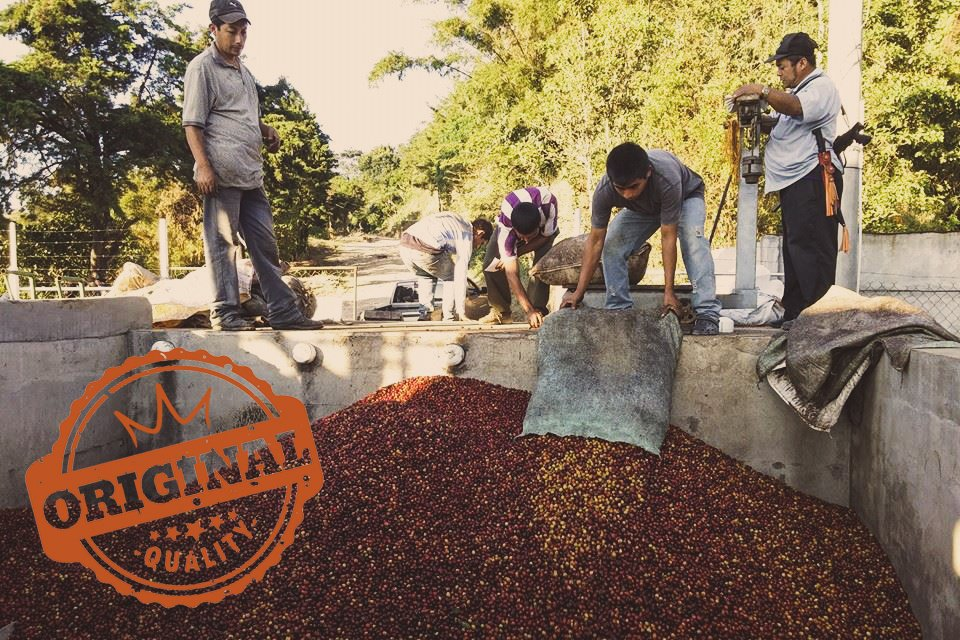 El Salvador Las Tinieblas - King's Coffee