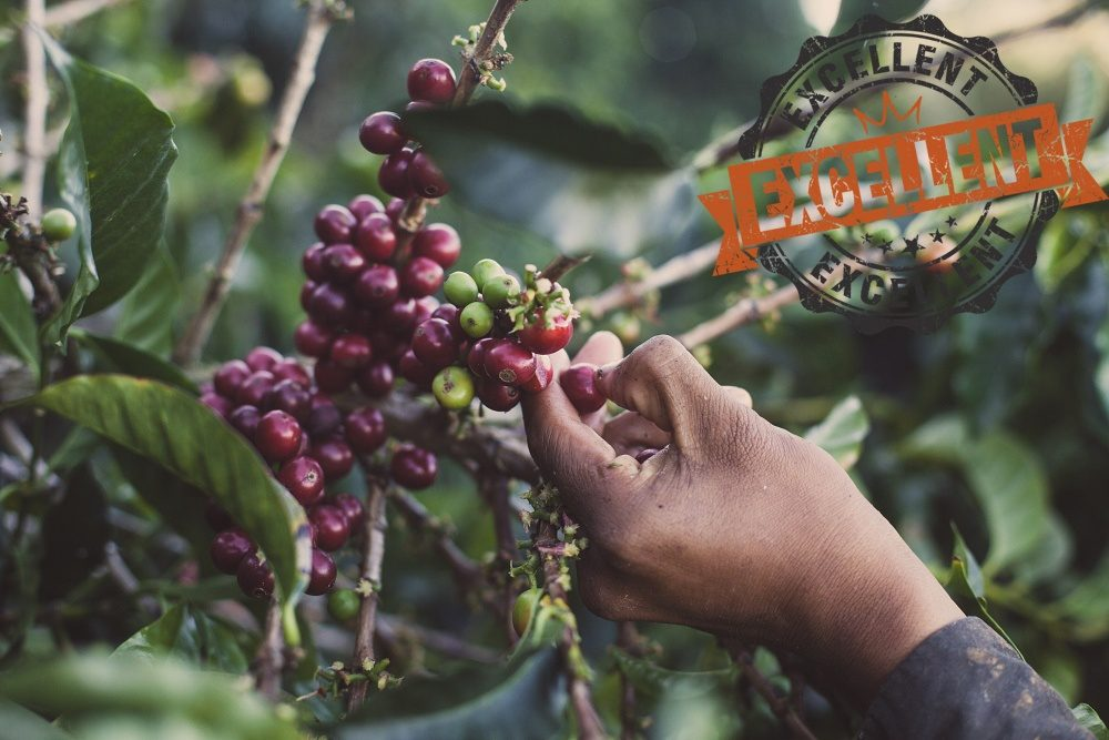 Costa Rica La Pastora - King's Coffee