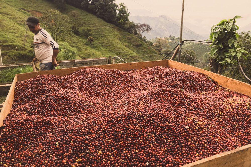 Colombia Bilbao - King's Coffee