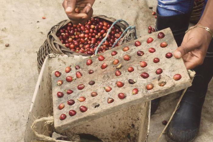 Dominican Republic Paraíso - King's Coffee