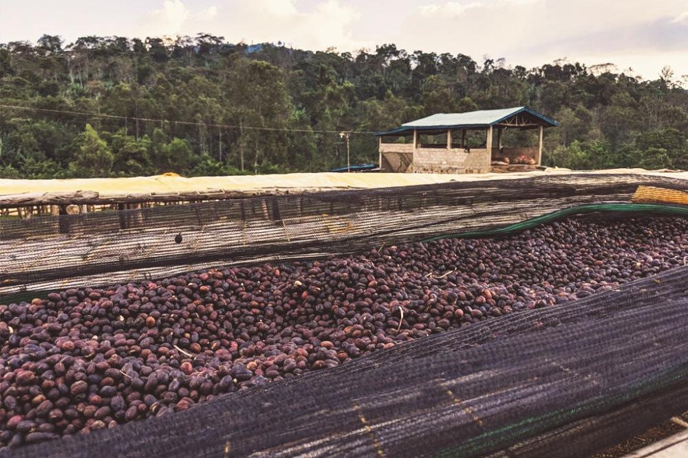 Ethiopia Yirgacheffe Koke - King's Coffee